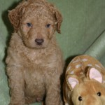 Crystal & Duffy - 5 week old puppies