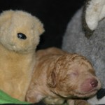 Crystal & Duffy - 1 week old puppies