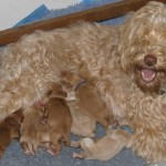 Molly Bloom - a very proud Mummy