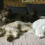 Molly, Bridie, Duffy, Sheena and Dainty