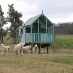 The Cream Labradoodles with their Cubby House