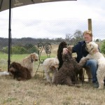The Labradoodles and the Labradoodler